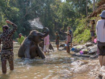 elephant bahting