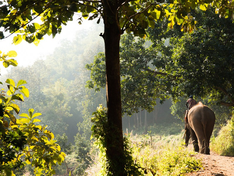 Horizontal-Image-of-Mahout-Riding-Elephant-in-Thailand