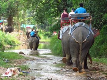 elephant ridding