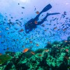 Scuba-Diver-on-coral-reef-in-clear-blue-water---Koh-Tao
